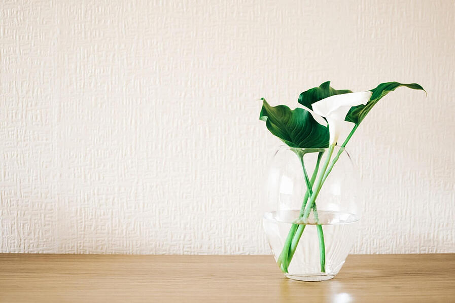 green-plant-in-clear-glass-vase