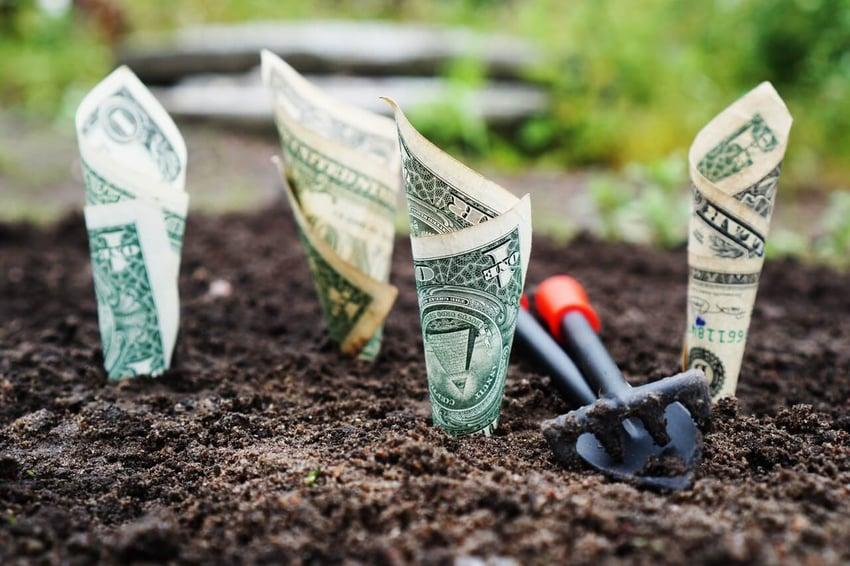 us-dollar-bills-planted-in-ground